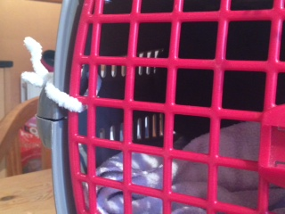 Pipe Cleaner Cat Basket Latch