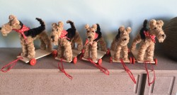 Airedales 1